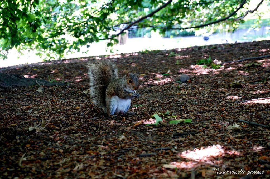 10 - Mademoiselle paresse - Central Park