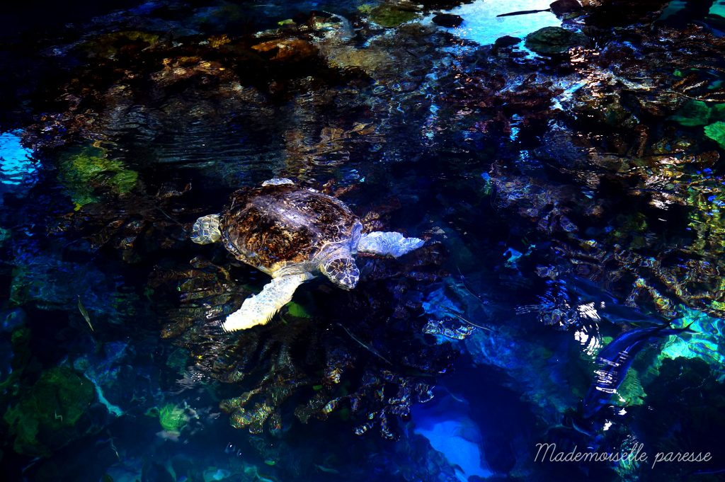 Mademoiselle paresse - Boston Aquarium