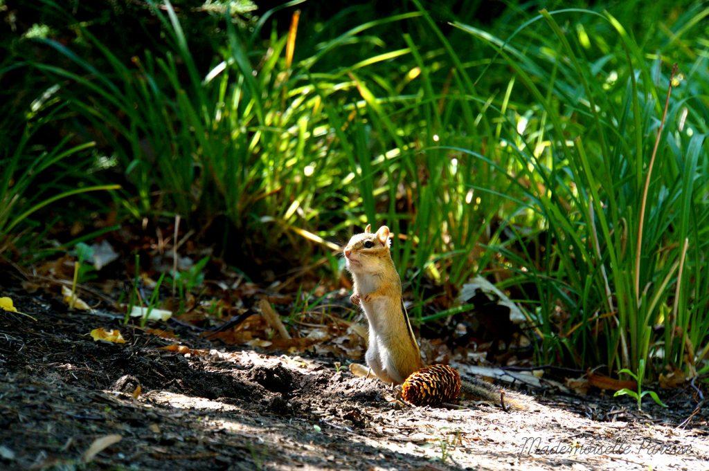 mademoiselle-paresse-ottawa-ecureuil-cute
